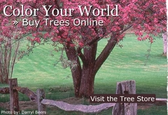 Arbor Day tree
