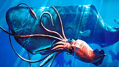 Giant Squid fighting Sperm Whale